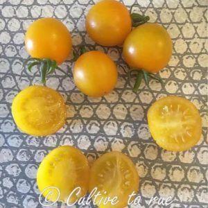 Amish cherry