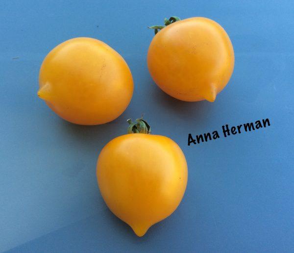 Anna herman