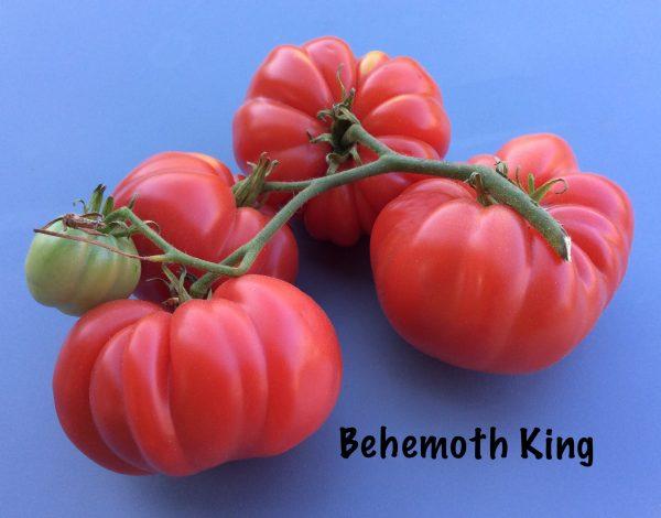 Behemoth King