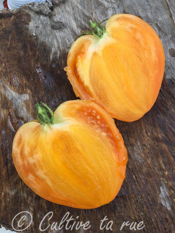 Pastel Orange Heart