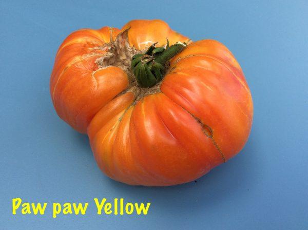 Paw Paw yellow