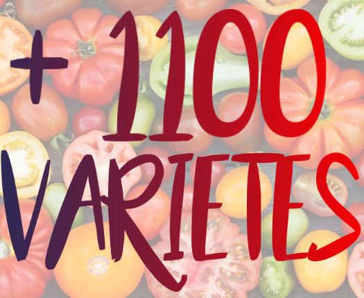 1100 variete