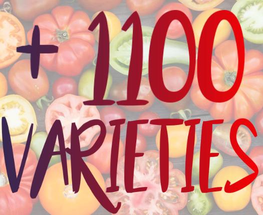 1100 varieties