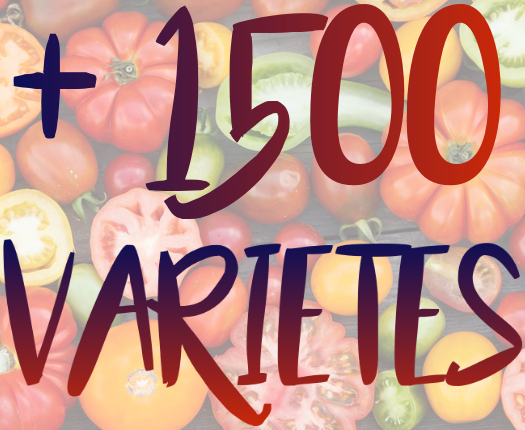 1500 variete