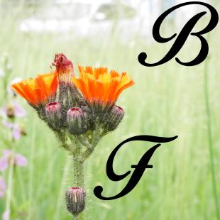 Flore benji